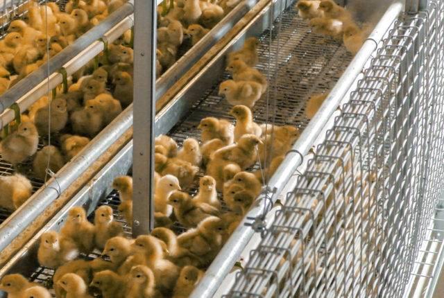 baby-area-aviary
