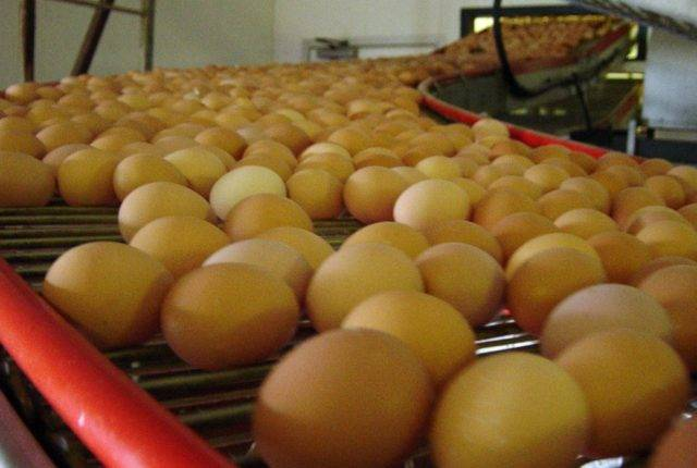 valli_eggconveyors-18