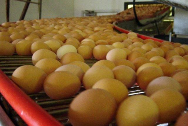 valli_eggconveyors-18