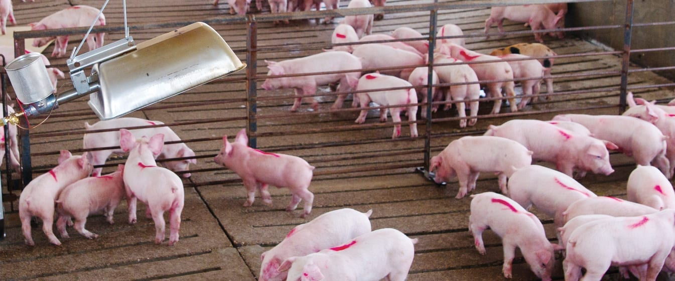 hog industry Nevertheless, the improving economic outlook is forecast to temper industry  demand, as consumers who were previously forced into pawn shop patronage  will.